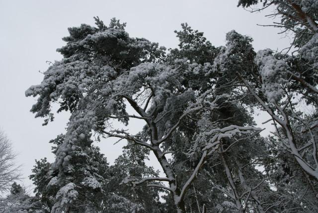 Największy błąd tej zimy popełniony