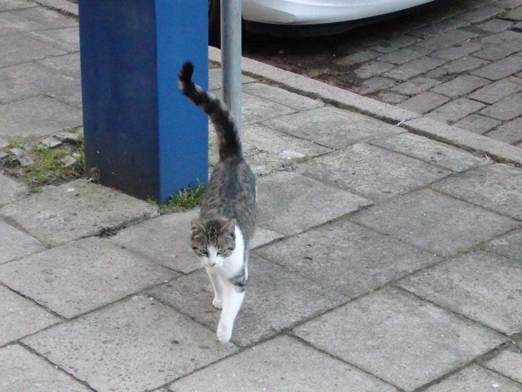 Niekiedy towarzysz podróży znajduje się sam - mi ten kot towarzyszył przez naprawdę sporą część drogi :)