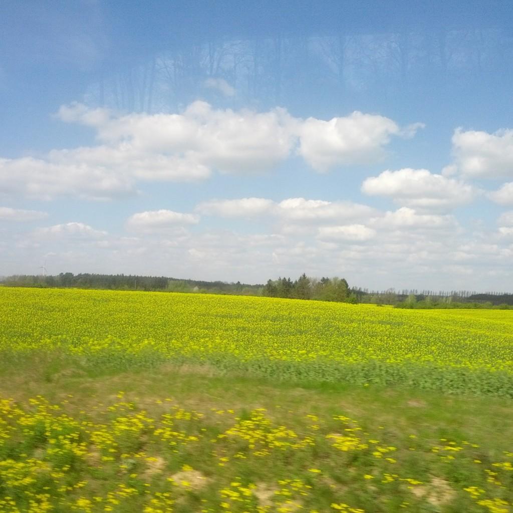 2015-05-06 Krajobraz Windows XP